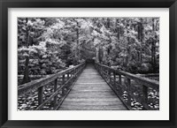 Framed Walk Into Tranquility