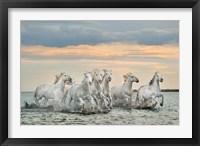 Framed Camargue Horses - France