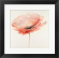 Framed Pink Chiffon I