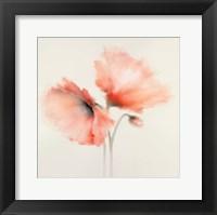 Framed Pink Chiffon II