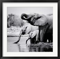 Framed Namibia Elephants
