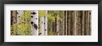 Framed White Forest Standing