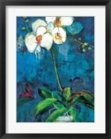Framed Phalaenopsis I