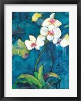 Framed Phalaenopsis II