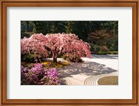 Framed Cherry Tree Blossoms Over A Rock Garden In The Japanese Gardens In Portland's Washington Park, Oregon