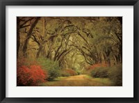 Framed Road Lined With Oaks & Flowers