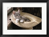 Framed Hat Kitten