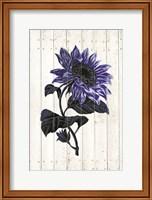 Framed Indigo Sunflower
