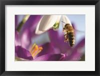 Framed Bee I