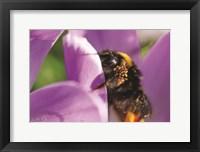 Framed Bee II