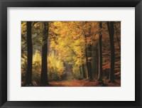 Framed Autumn Mood
