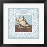 Framed Sandy Shells Blue Spikey