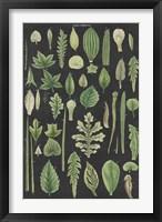 Framed Assortment of Leaves II Charcoal Crop