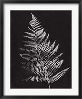 Framed Nature by the Lake Ferns VI Black Crop