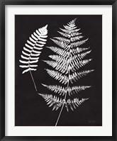 Framed Nature by the Lake Ferns V Black Crop