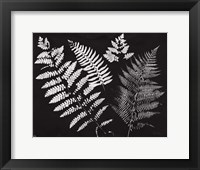 Framed Nature by the Lake Ferns II Black Crop