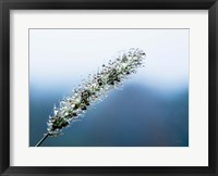 Framed Seeds and Water III