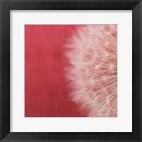 Framed Dandelion on Red II