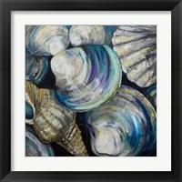 Framed Key West Shells