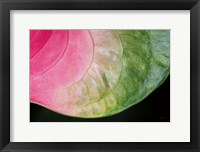 Framed Pink and Green