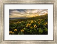 Framed Sunflower Field