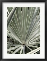 Framed Organic Palm I