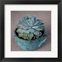 Framed Little Succulent