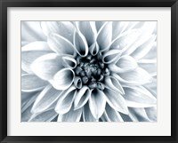 Framed Bright White Bloom