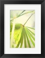 Framed Among Palms II