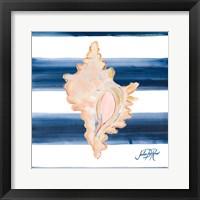 Framed Nautical Shell II