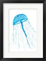 Framed Jellyfish I