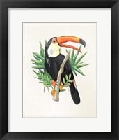 Framed Toucan I