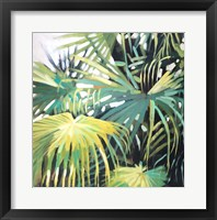 Framed Chinese Windmill Palm