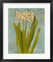 Framed Hyacinth on Teal II