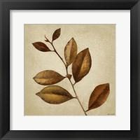 Framed Antiqued Leaves II