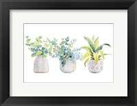 Framed Decorative Plant Arrangement I