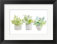 Framed Decorative Plant Arrangement II