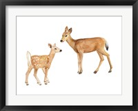 Framed Two Young Deer