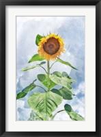Framed Summer Sunflower