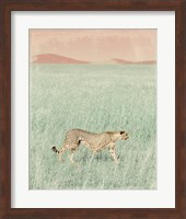 Framed Cheetah in the Wild