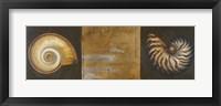 Framed Seashells I