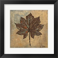 Maple III Framed Print