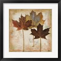 Framed Natural Leaves III