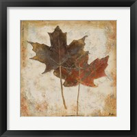 Framed Natural Leaves IV