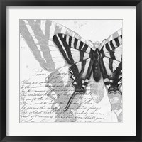 Framed Butterflies Studies II