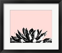 Framed Agave on Blush