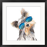 Framed Yorkie with Shades