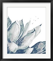 Framed Blue Agave on White II