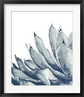 Framed Blue Agave on White I