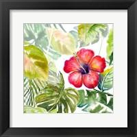 Framed Hibiscus on Selva